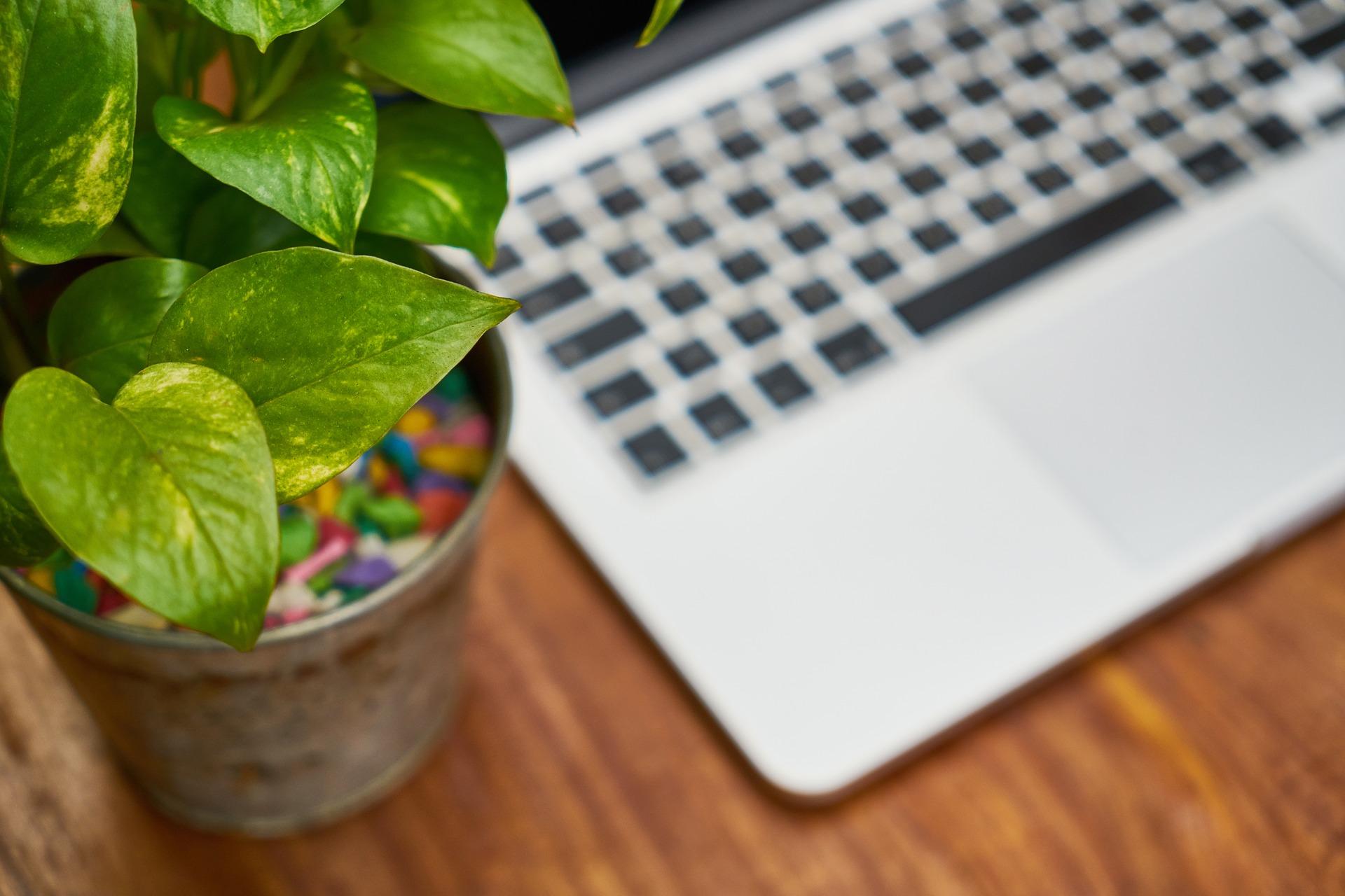 Piante Ufficio Stress : Come vivere bene in ufficio servono le piante stile