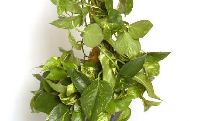 6 piante da ufficio per ridurre lo stress e purificare l - Piante da ufficio resistenti ...