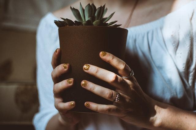 Piante Ufficio Ossigeno : Il mondo in un giardino piante utili contro l inquinamento domestico