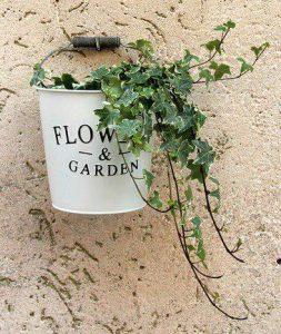 piante-purifica-aria-edera